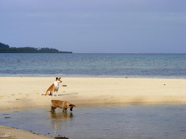 Playing on a Beach - Fiji