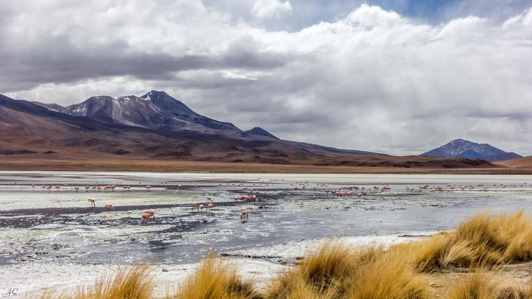 Laguna Hedionda, Bolivia